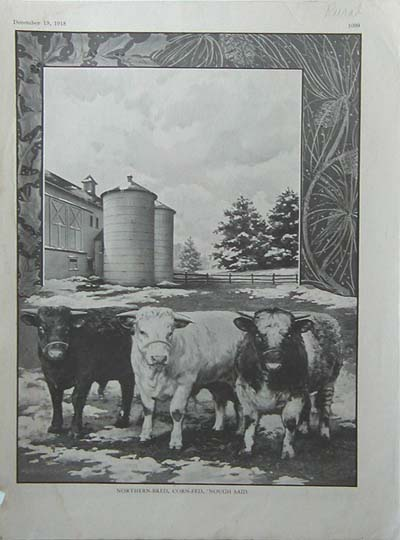 Northern-Bred Shorthorn Illustration, Breeder's Gazette, 1917