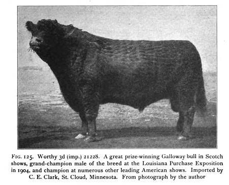 Worthy 3rd, Galloway Bull